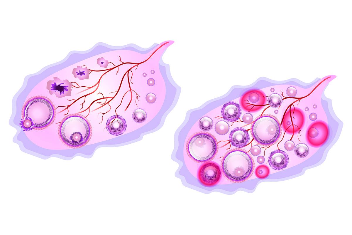 Ovulacion mujeres